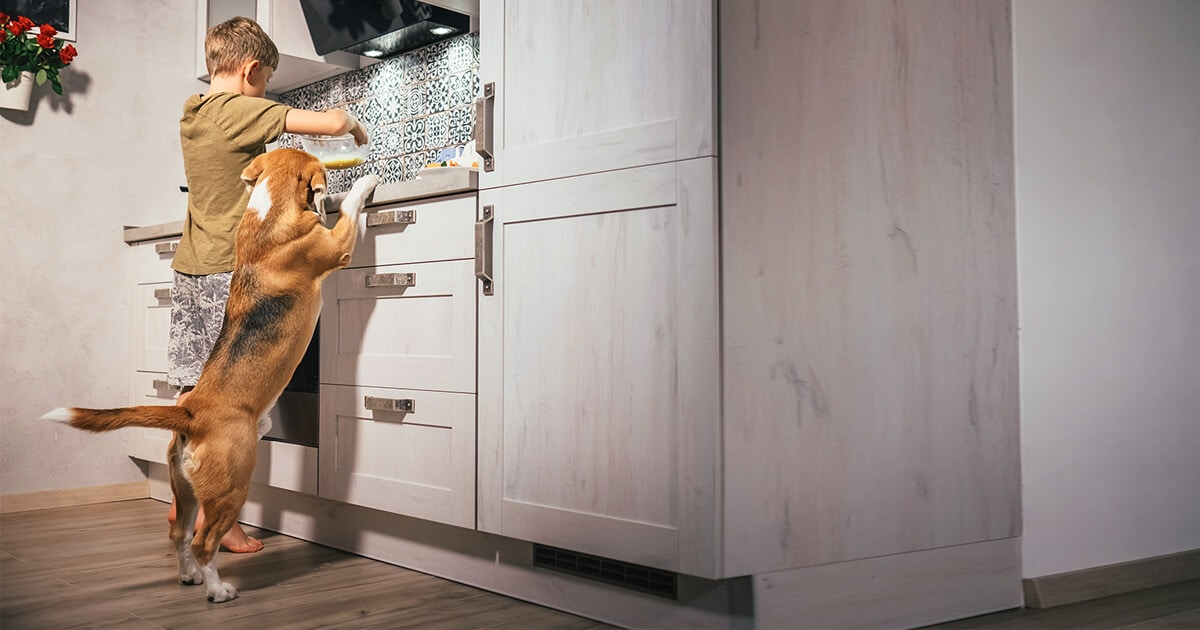 5 pet-friendly design ideas for your home