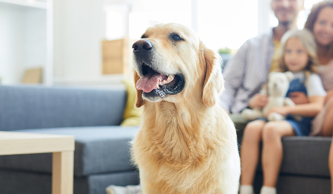 How to be pet-friendly and profitable in your multi-family apartments
