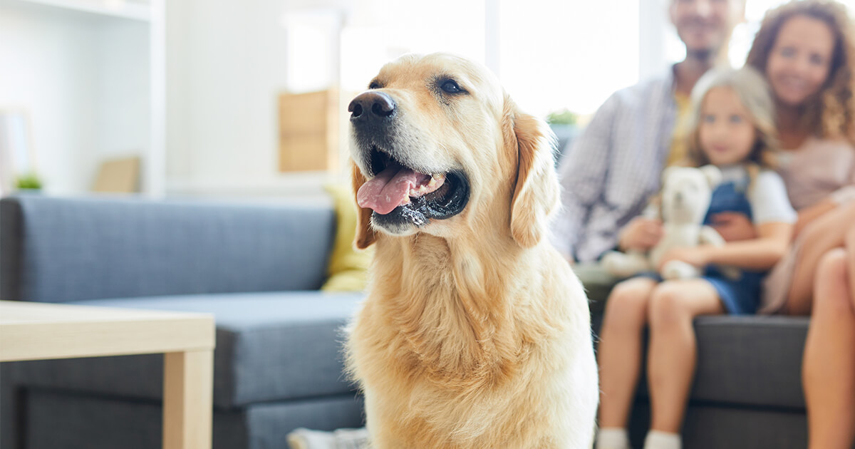 Happy dog in front of a family sitting on a couch in a pet-friendly living room