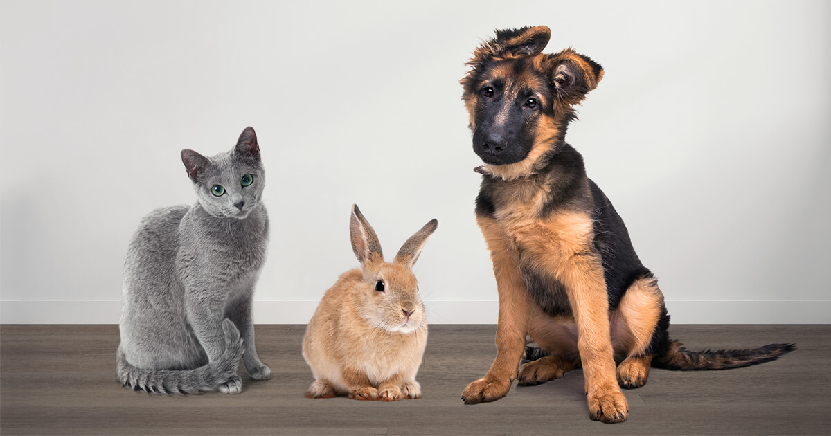 A cat, rabbit, and dog sitting on Urban Surfaces' pet-friendly flooring